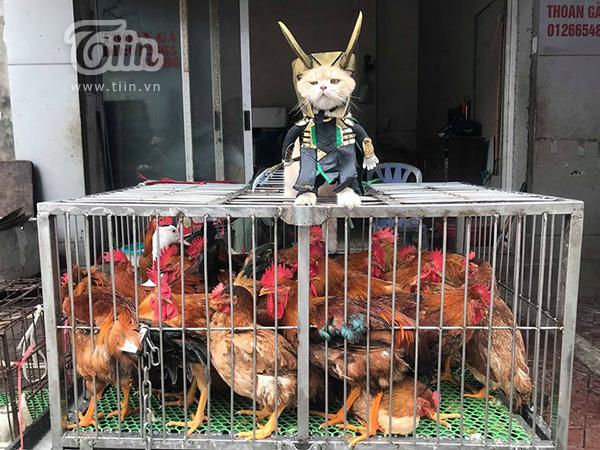 Sau đó lại biến hình thành Loki bảo vệ đàn gà