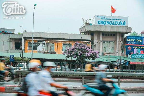 Có một mùa hoa tím gọi hè về trên phố Hà Nội 5