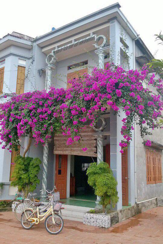 Ngôi nhà với góc sân rộng và giàn hoa giấy siêu xinh. Thế này thì cứ muốn ở nhà mãi thôi (Ảnh: Đức Anh Vũ)