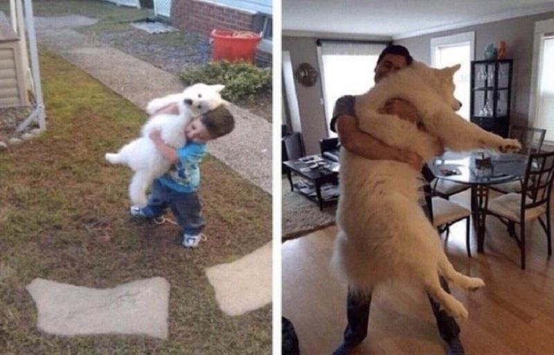 Khi thú cưng lớn cũng là lúc ta trưởng thành. Vẫn là cái ôm đầy tình cảm như xưa nhưng giờ chàng trai này không thể vác chó trên vai được nữa vì nó đã to gần bằng cơ thể anh chàng.