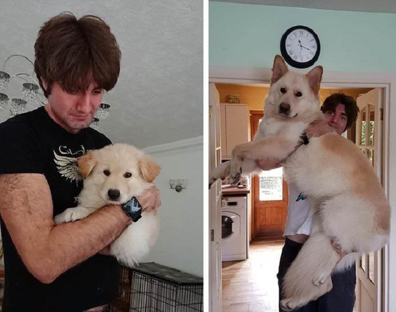 Khi cún cưng còn nhỏ cứ ngỡ đang ôm cục bông trong tay. Ai ngờ lúc nó lớn lên tưởng đâu đang ôm 'người tuyết khổng lồ'.
