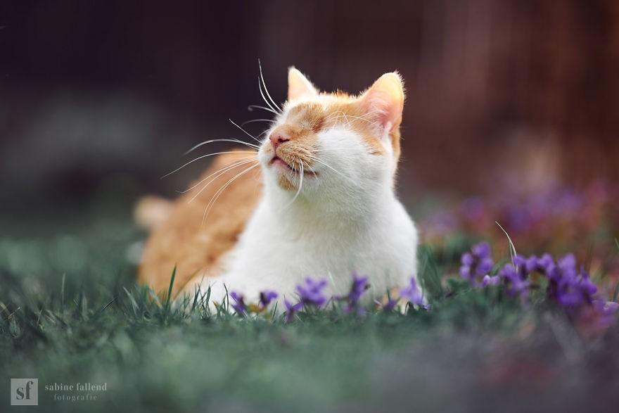 Không có gì thích thú hơn việc được nằm dài trên bãi cỏ êm, trước mặt là cả một vườn hoa thơ mộng