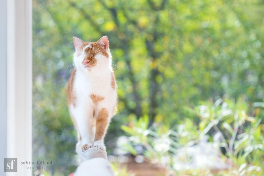 'Lụi tim' trước bộ ảnh chú mèo không có mắt vẫn dễ thương hết phần thiên hạ 5