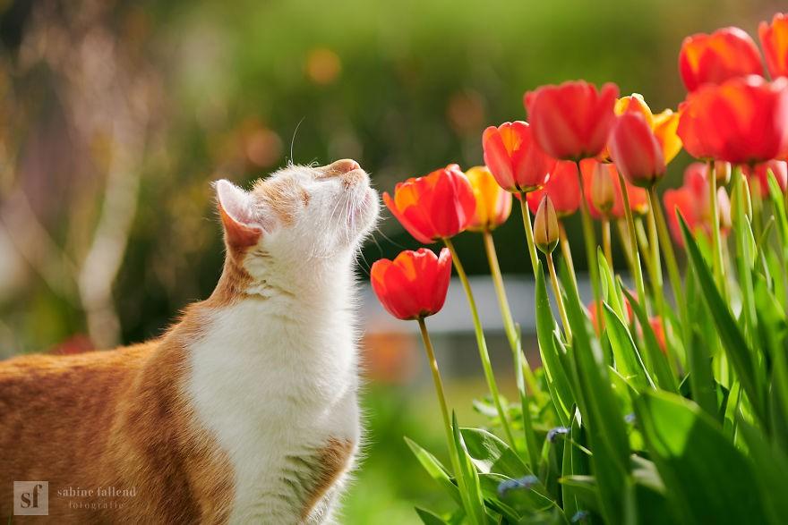 Mất thị giác không có nghĩa là không biết hoa đẹp, Kazou vẫn thưởng thức những bông hoa theo cách của riêng mình