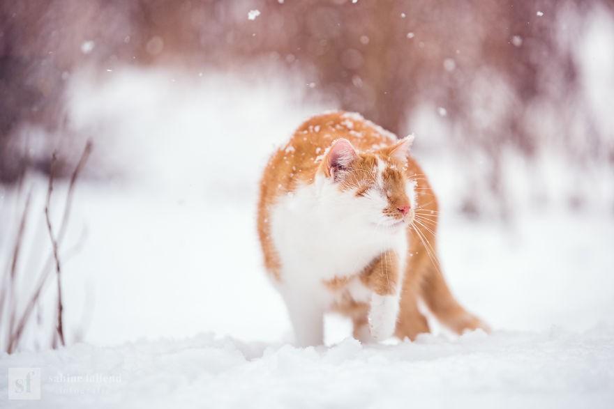 Đùa nghịch trong tuyết thật là vui!