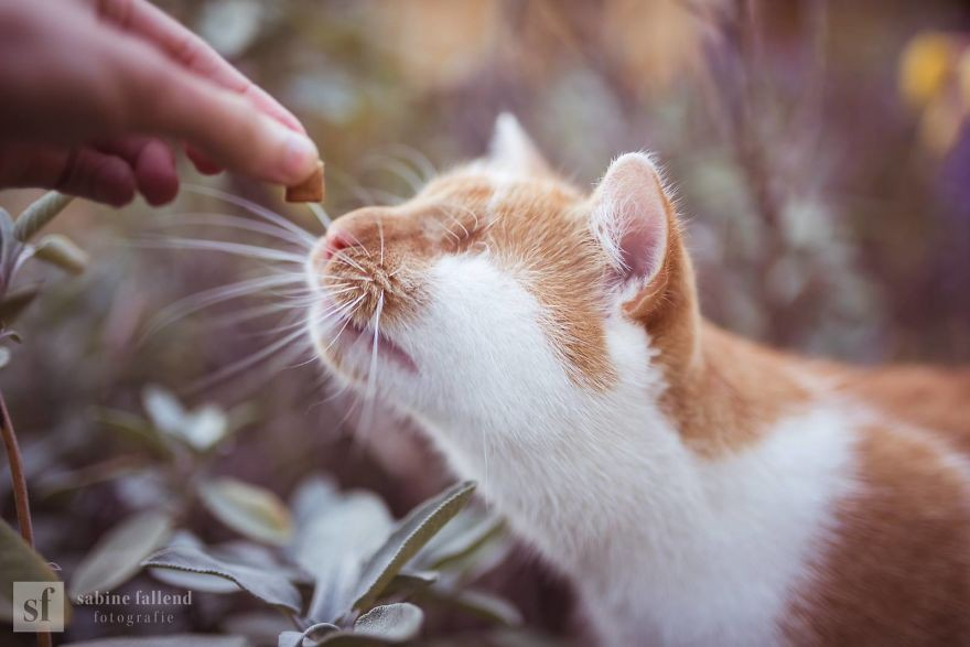 Kazou rất yêu đời, có vẻ như chú mèo biết rằng mình đang được sống trong một thế giới rất thú vị