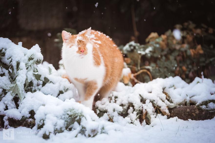 'Lụi tim' trước bộ ảnh chú mèo không có mắt vẫn dễ thương hết phần thiên hạ 8