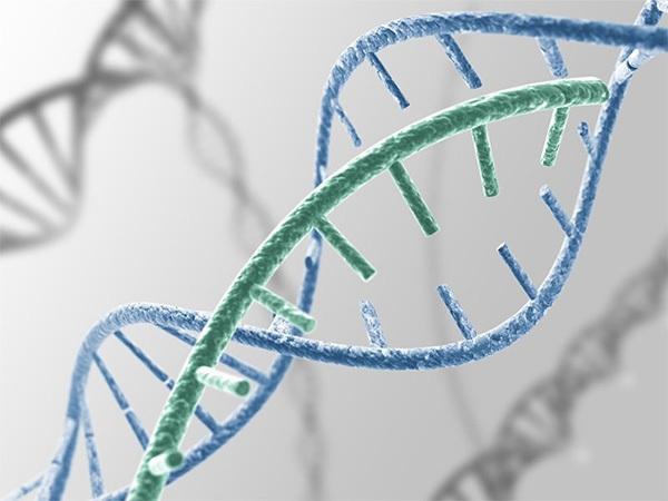 Yếu tố di truyền là một trong những nguyên nhân của lỗ chân lông to