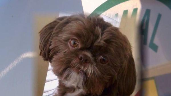 Chú chó Emma bị an tử theo di nguyện của chủ quá cố. Ảnh: WSMV