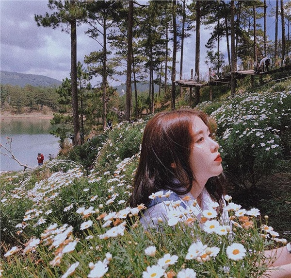 Đến Đà Lạt vào tháng 6: Lạc lối trong màu trắng tinh khôi của vườn cúc họa mi bên bờ hồ 2
