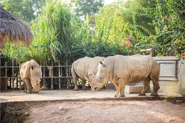 Đến Nghệ An, mục sở thị 2.000 động vật hoang dã quý hiếm ờ vườn thú lớn nhất Bắc Trung bộ 1