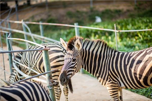 Đến Nghệ An, mục sở thị 2.000 động vật hoang dã quý hiếm ờ vườn thú lớn nhất Bắc Trung bộ 2