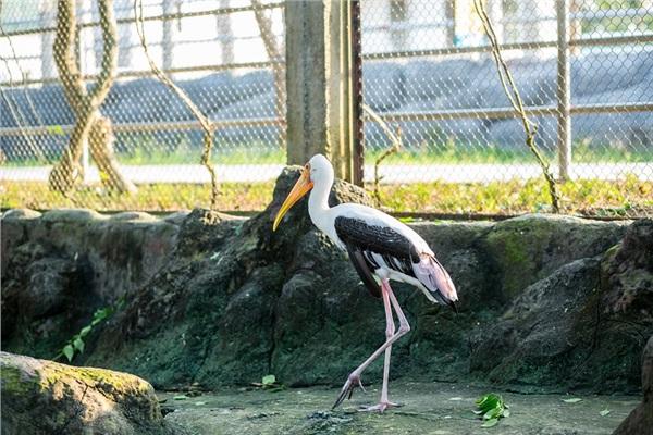Đến Nghệ An, mục sở thị 2.000 động vật hoang dã quý hiếm ờ vườn thú lớn nhất Bắc Trung bộ 4