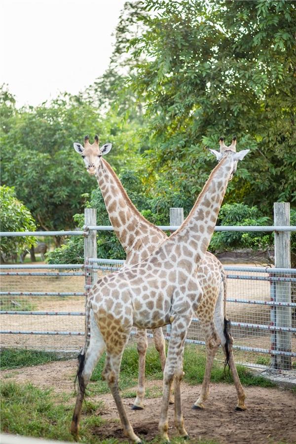 Đến Nghệ An, mục sở thị 2.000 động vật hoang dã quý hiếm ờ vườn thú lớn nhất Bắc Trung bộ 5