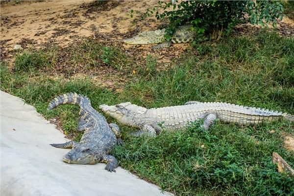 Đến Nghệ An, mục sở thị 2.000 động vật hoang dã quý hiếm ờ vườn thú lớn nhất Bắc Trung bộ 6