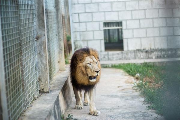 Đến Nghệ An, mục sở thị 2.000 động vật hoang dã quý hiếm ờ vườn thú lớn nhất Bắc Trung bộ 7