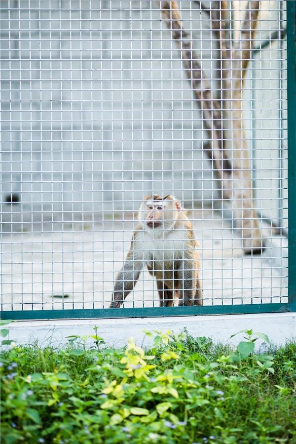 Đến Nghệ An, mục sở thị 2.000 động vật hoang dã quý hiếm ờ vườn thú lớn nhất Bắc Trung bộ 8