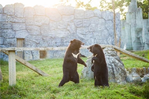 Đến Nghệ An, mục sở thị 2.000 động vật hoang dã quý hiếm ờ vườn thú lớn nhất Bắc Trung bộ 9