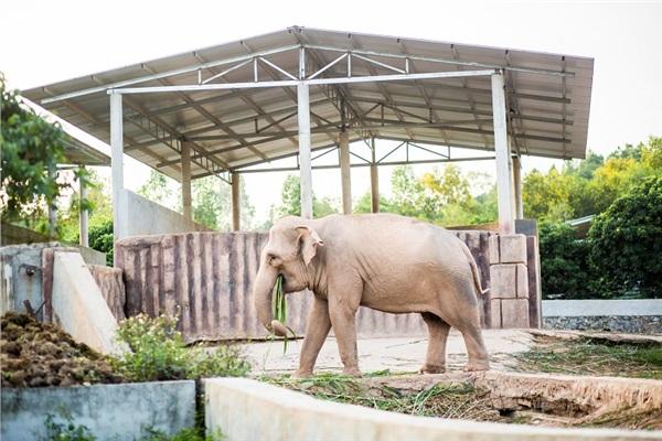 Đến Nghệ An, mục sở thị 2.000 động vật hoang dã quý hiếm ờ vườn thú lớn nhất Bắc Trung bộ 10