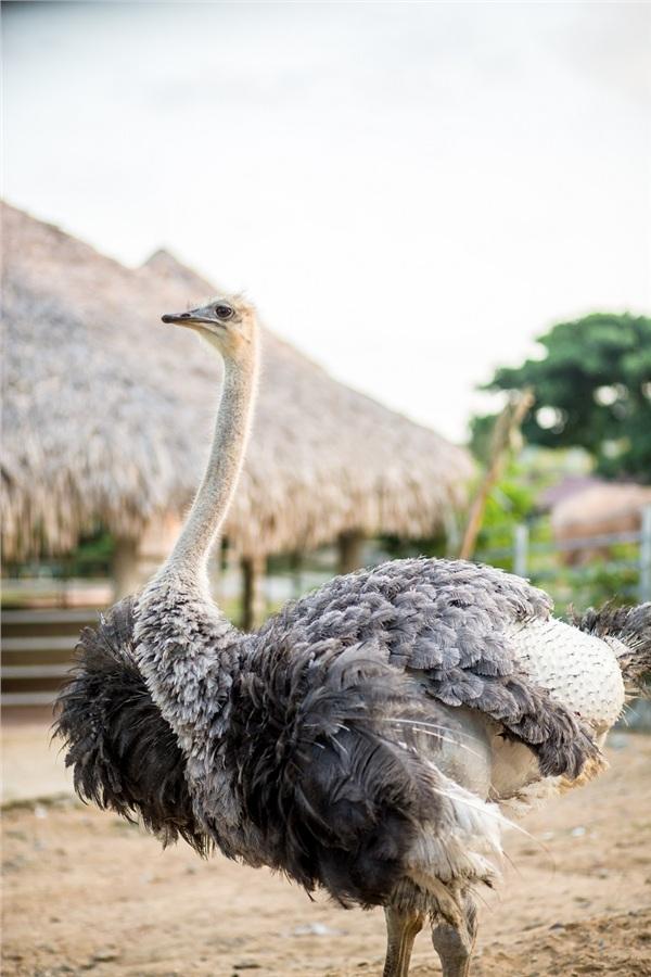 Đến Nghệ An, mục sở thị 2.000 động vật hoang dã quý hiếm ờ vườn thú lớn nhất Bắc Trung bộ 11