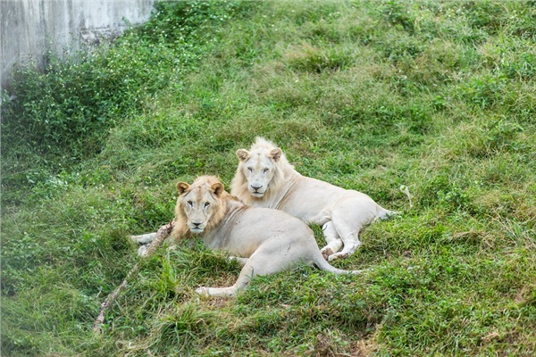 Đến Nghệ An, mục sở thị 2.000 động vật hoang dã quý hiếm ờ vườn thú lớn nhất Bắc Trung bộ 13