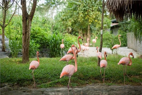 Đến Nghệ An, mục sở thị 2.000 động vật hoang dã quý hiếm ờ vườn thú lớn nhất Bắc Trung bộ 15