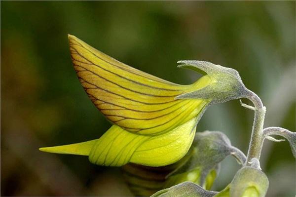 Phát sốt với loài hoa kì lạ và bí ẩn có hình dáng như một chú chim ruồi tí hon nằm gọn trong lòng bàn tay 1