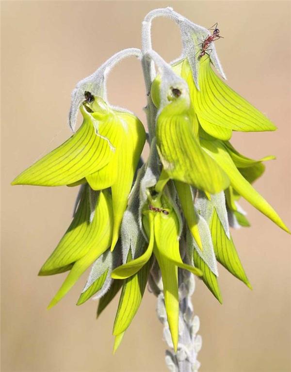 Phát sốt với loài hoa kì lạ và bí ẩn có hình dáng như một chú chim ruồi tí hon nằm gọn trong lòng bàn tay 3