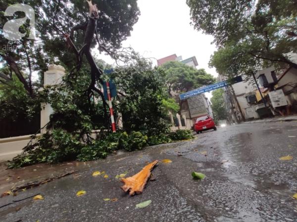 Cây đổ ở đầu phố Đặng Tất - Phan Đình Phùng