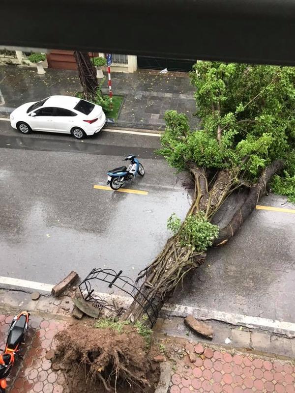Hú hồn hình ảnh người đi đường thoát chết trong gang tấc vì cây đổ do mưa bão ở Hà Nội 4
