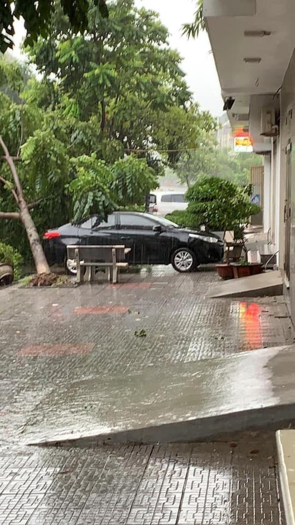 Hú hồn hình ảnh người đi đường thoát chết trong gang tấc vì cây đổ do mưa bão ở Hà Nội 7