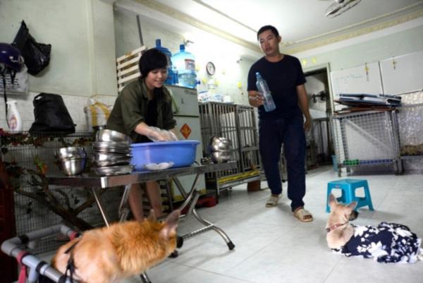 Hiện tại, đội cứu hộ đang chăm sóc 93chú chó bị bỏ rơi.