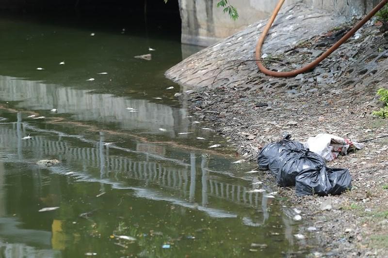 Những túi nilon đen đựng xác cá chết vẫn đang được để ở các khu vực ven hồ.