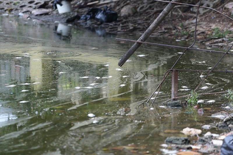 Nhất là ở các khu vực có nhiều rác thải hoặc cửa các miệng cống nước.