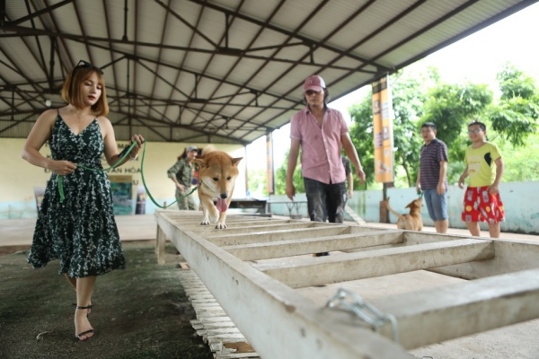 Phim điện ảnh Việt đầu tiên có diễn viên chính là nhân vật 'bốn chân' lộ diện! 2