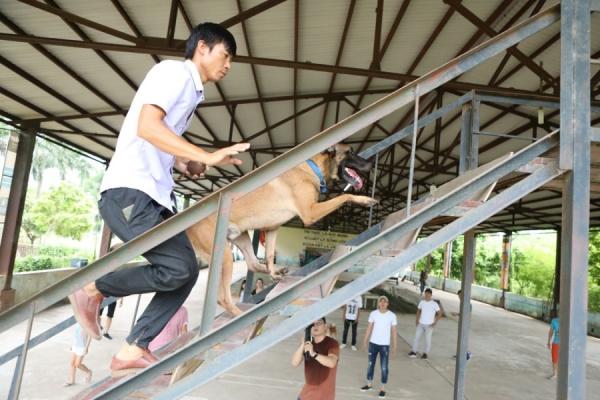 Bị chỉ trích dùng chó Nhật đóng vai chó Việt, nhà sản xuất 'Cậu Vàng' nói gì? 2
