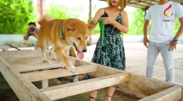 Bị chỉ trích dùng chó Nhật đóng vai chó Việt, nhà sản xuất 'Cậu Vàng' nói gì? 3