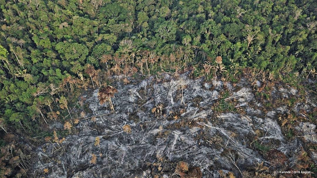 Nếu rừng Amazon biến mất, thế giới mất đi 20% lượng nước ngọt, 20% lượng oxy, con người chịu ảnh hưởng trực tiếp 0
