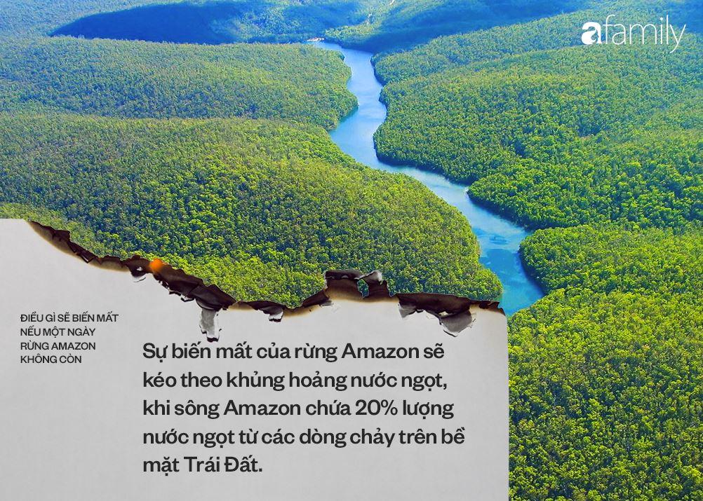 Nếu rừng Amazon biến mất, thế giới mất đi 20% lượng nước ngọt, 20% lượng oxy, con người chịu ảnh hưởng trực tiếp 1