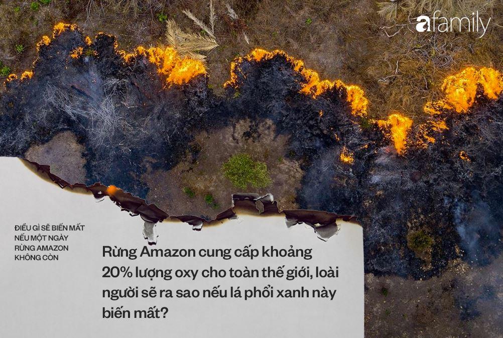 Nếu rừng Amazon biến mất, thế giới mất đi 20% lượng nước ngọt, 20% lượng oxy, con người chịu ảnh hưởng trực tiếp 2