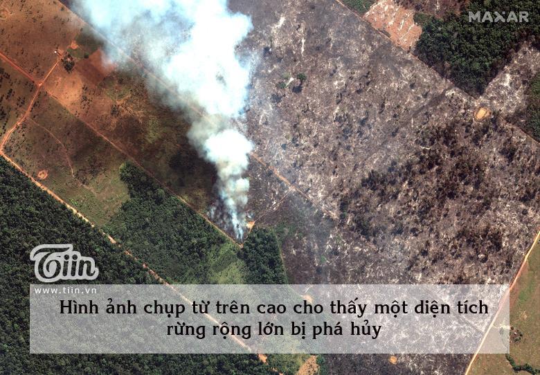 Cháy rừng Amazon: Cuộc sống như tận thế với nhiều loài 4