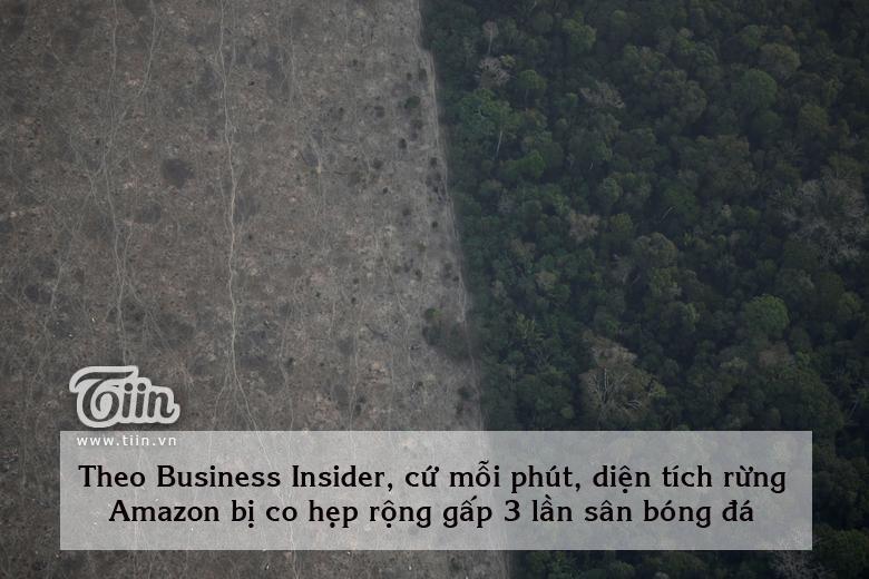 Cháy rừng Amazon: Cuộc sống như tận thế với nhiều loài 5