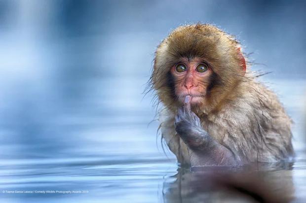 Nước ấm dễ chịu quá, thử tè bậy một bãi xem có ai biết không nhỉ.