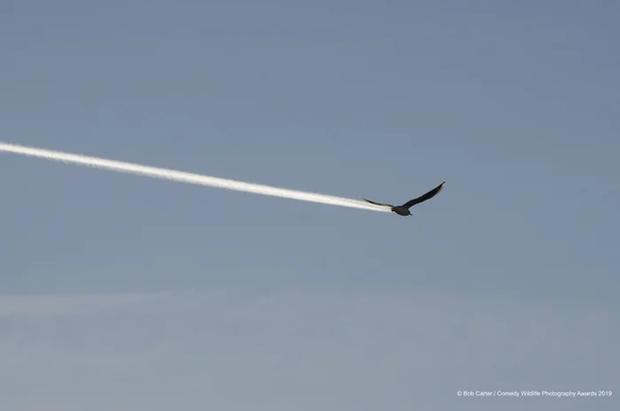 Khi bạn muốn làm tên lửa, nhưng thượng đế lại để bạn đầu thai nhầm là kiếp con chim.