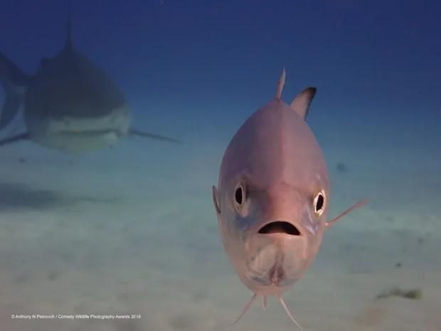 Ê, bọn cá mập đằng sau bơi chậm như rùa bò ấy, sợ đếch gì.