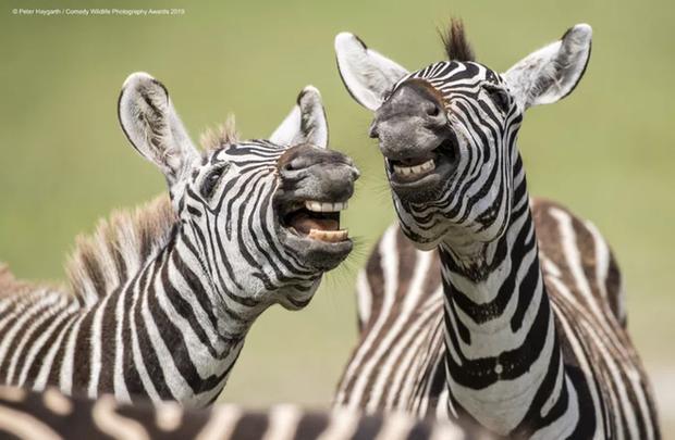 Thi xem ai răng trắng hơn không, cười hở 10 cái răng.