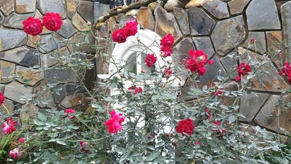 Từng góc nhỏ trong khuôn viên ngôi nhà đều được phủ xanh bằng cây cối, hoa lá...