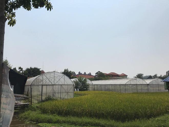 Khu trang trại được nhà sư Thích Thanh Toàn nhắc đến ở chùa Nga Hoàng hiện đang được dựng thành các nhà bóng kính trồng rau và trồng lúa