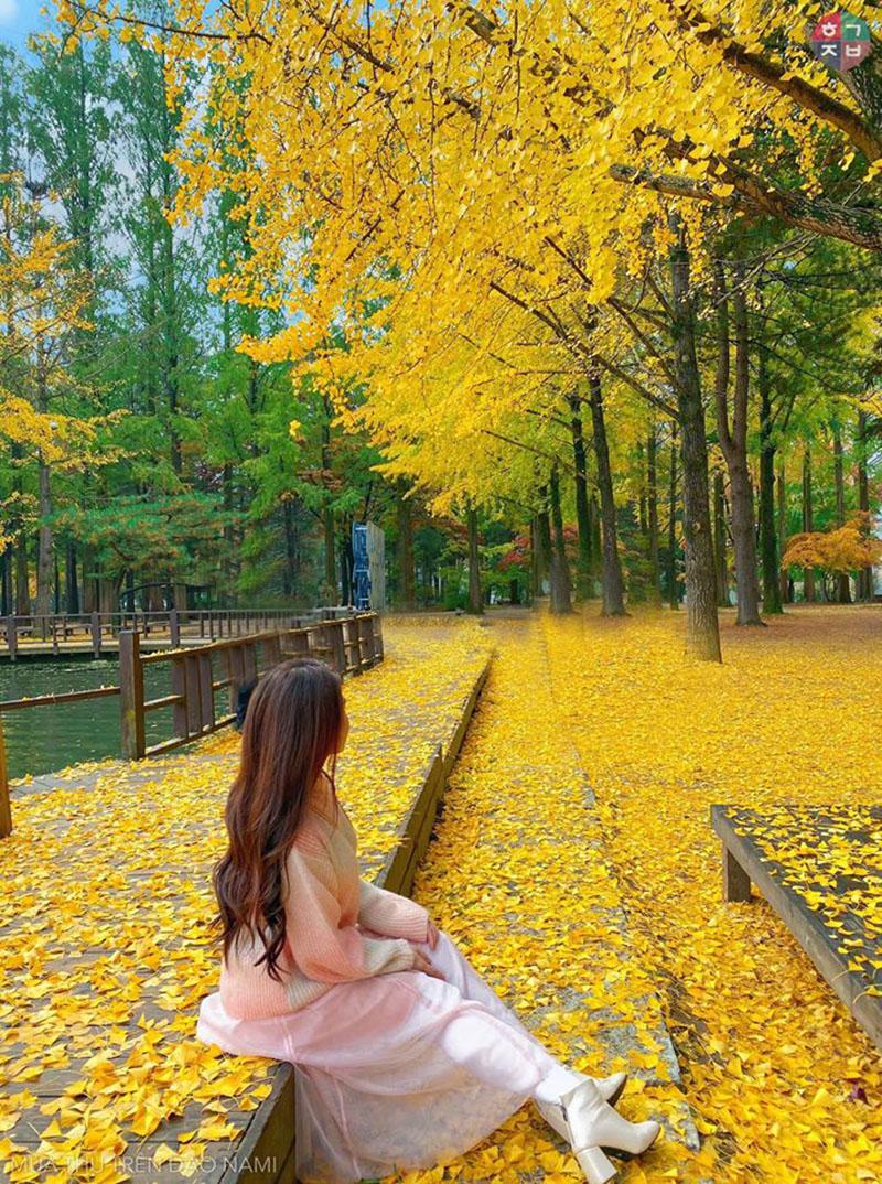 Chụp ảnh trên những thảm lá thế này thì còn gì bằng(Ảnh: Dương Quỳnh)