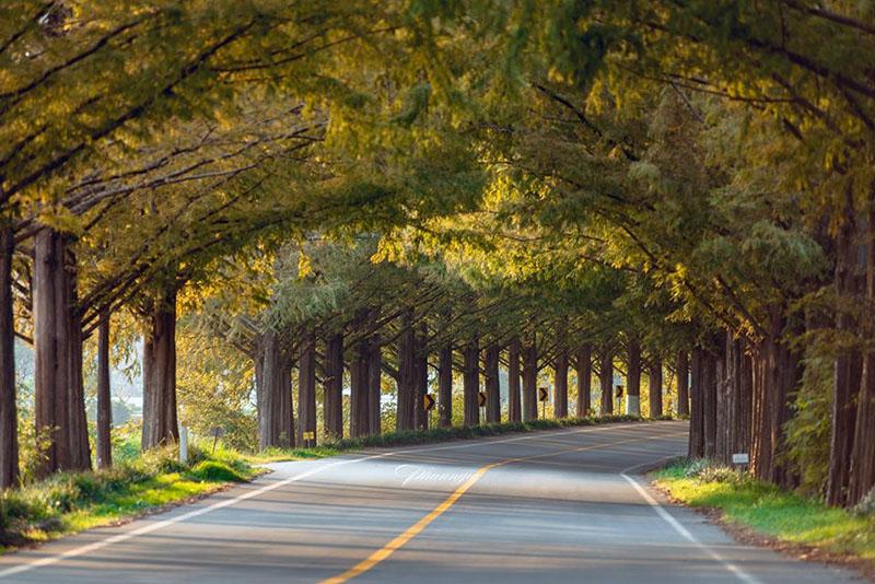 Những cung đường yên lành với nắng và cây(Ảnh: Phan Bảo Ngọc)